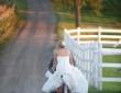 8-forms-of-wonderful-wedding-transport-3