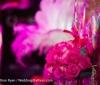 wedding-ideas-awards-2012-part-2-107