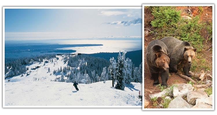 vancouver-grouse-mountain-bear