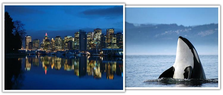 vancouver-orca-cityscape
