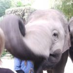 Four Seasons baby elephants-featured