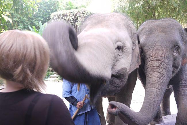 Four Seasons baby elephants