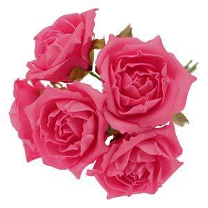 hot-pink-foam-roses