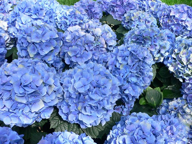 Hydrangea Wedding Flowers by Season: Your Ultimate Guide to Seasonal Wedding Flowers