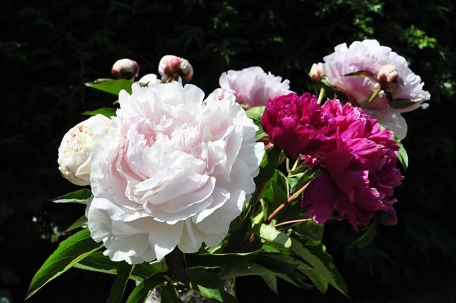 peony Wedding Flowers by Season: Your Ultimate Guide to Seasonal Wedding Flowers