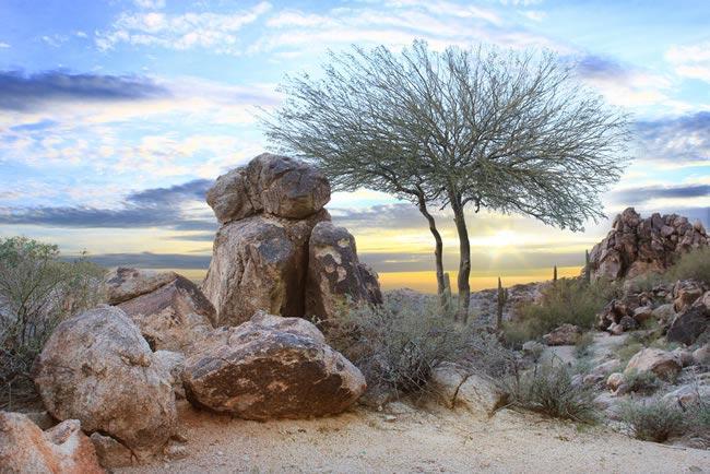 5.Arizona