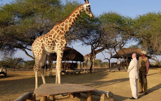 unusual-wedding-ceremony-locations-nguni-sanctuary