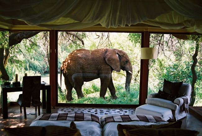 save-s-in-the-great-honeymoon-sale-from-turquoise-holidays-Makanyane-Safari-Lodge-South-Africa