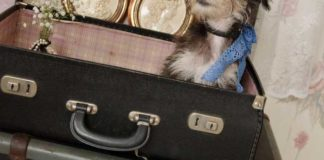 7-hot-wedding-details-to-hire-for-your-vintage-reception-Suitcases-bohemiandreams.co.uk-hire-from-(15)