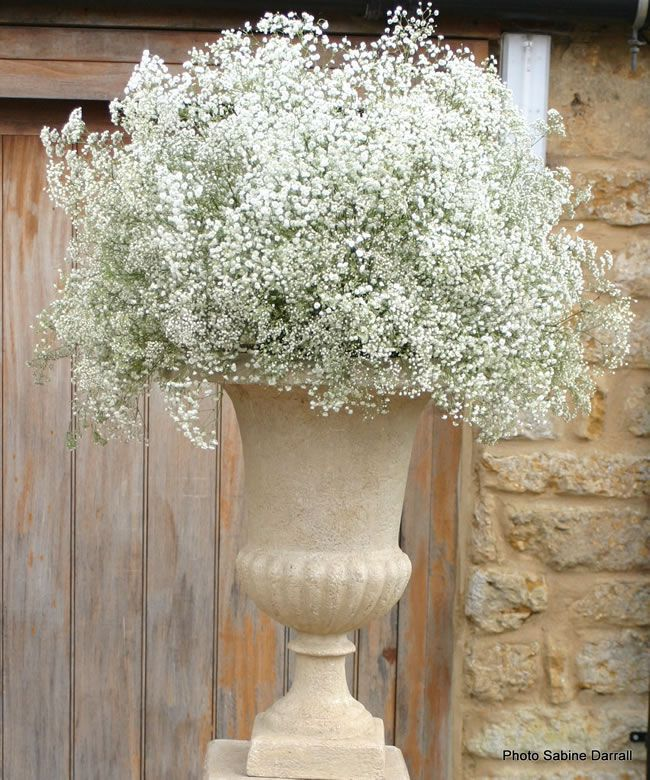 Cheap Wedding Flowers: Ways To Save On Your Wedding Flowers Gypsophila