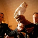 barn-owl-ring-bearers-delight-brides-at-dalhousie-castle-Falconry
