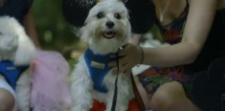3-fabulous-movie-themed-proposals-that-will-take-your-breath-away-dog