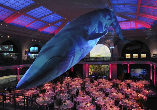 50-of-the-best-uk-wedding-venues-part-2-Natural-History-Museum