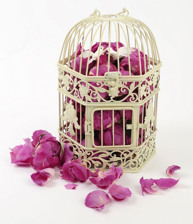6-genius-ways-to-use-shropshire-petals-in-your-day-birdcages