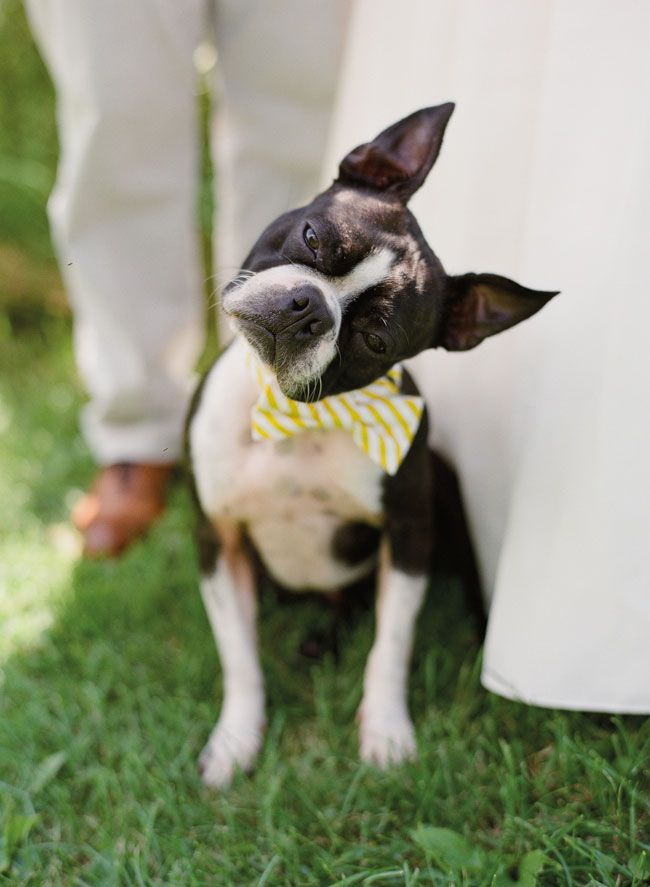 14-of-the-quirkiest-moments-captured-at-real-weddings-emilysteffen.com