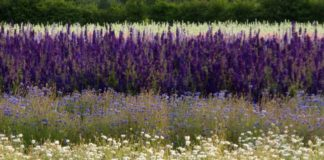 know-your-petals-a-brides-quick-guide-to-real-flower-confetti-Flower-Fields