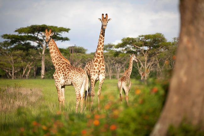 healthy-honeymoon-ideas-Top-5-South-Africa