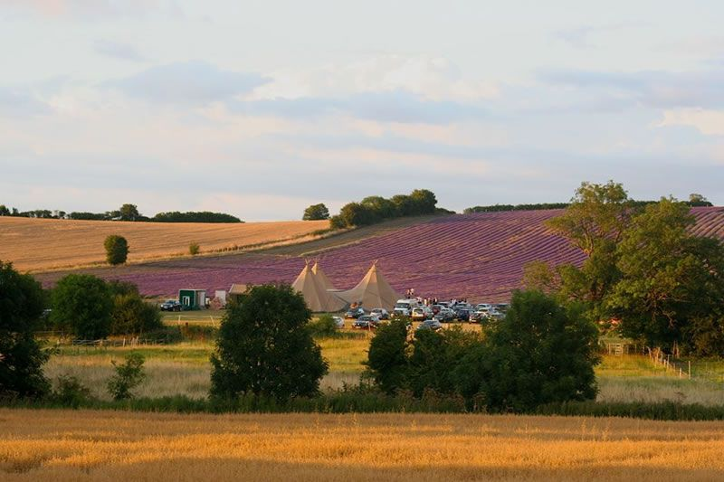 5-things-to-do-before-venue-Hitchin Lavender