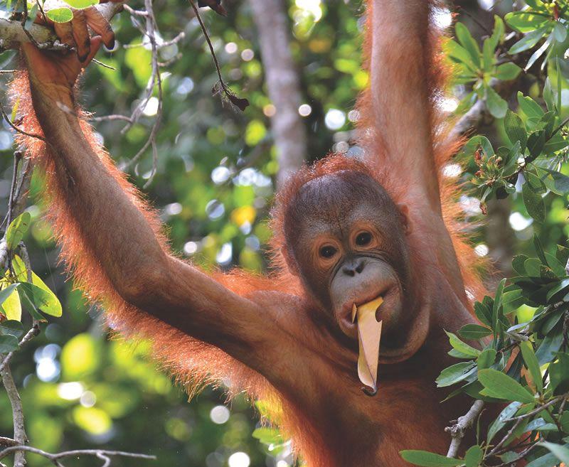 top-honeymoon-trends-2015-Borneo - One more shot Rog, Flickr