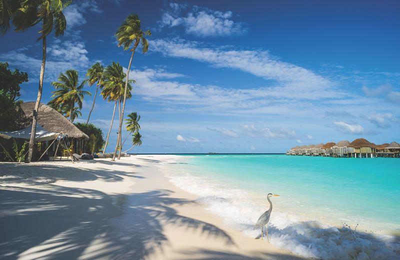 top-honeymoon-trends-2015-Maldives - Mac Qin, Flickr