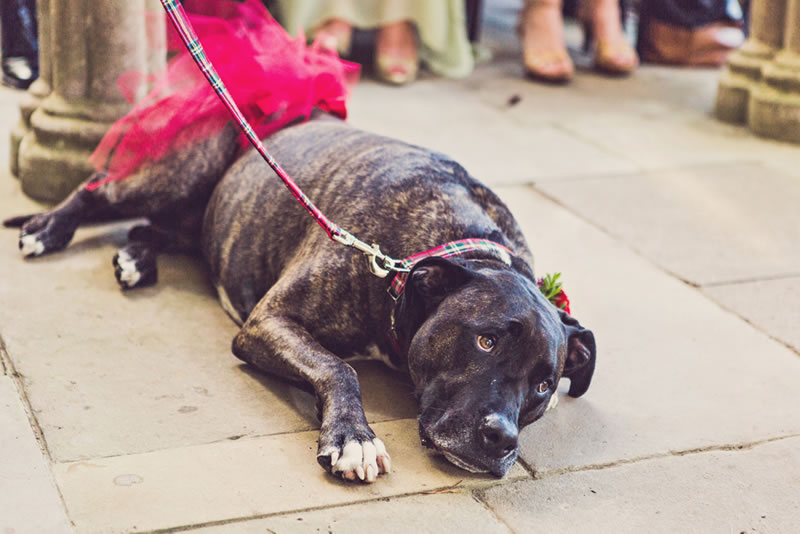 7-tips-pets-weddings-clairepennphotography.com  culzean_castle_wedding_clairepennphotography_141