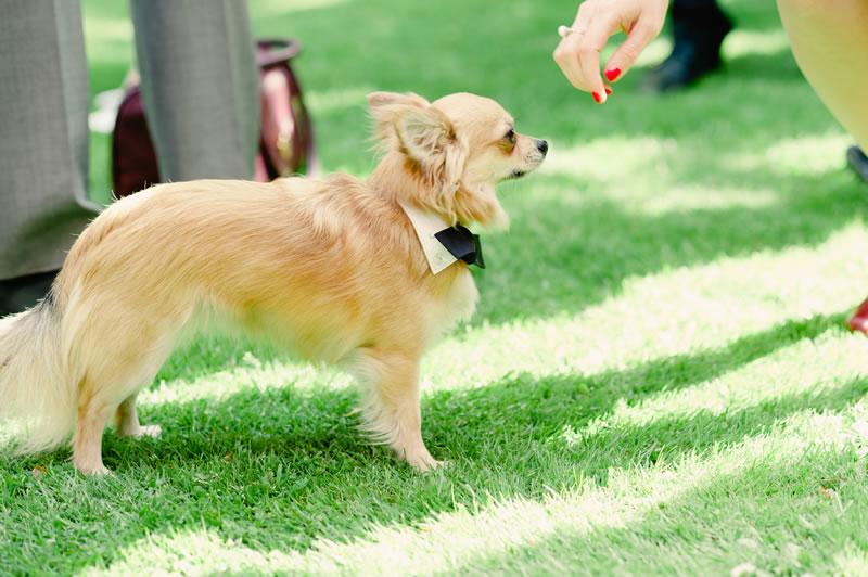 7-tips-pets-weddings-kerriemitchell.co.uk   2013-06-02 00309
