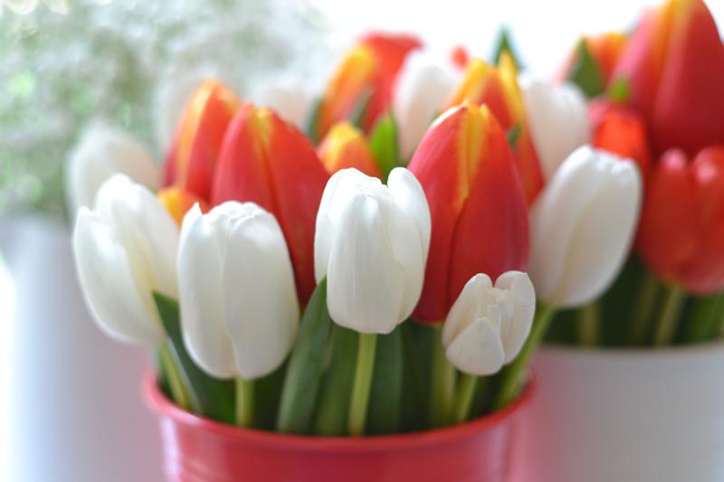 flowers-for-all-seasons-02 February - Tulips