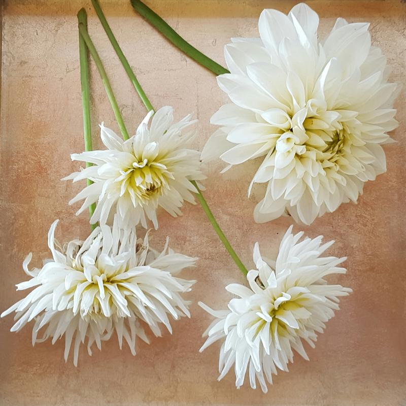 flowers-for-all-seasons-08 August - Dahlias