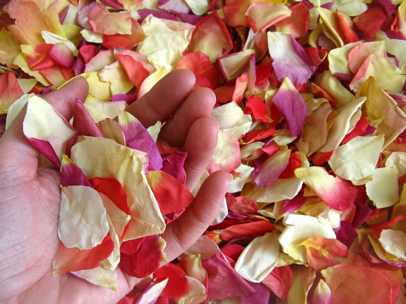 Find out exactly how much wedding confetti you will need with The Real Flower Petal Confetti Company plus how to create a gorgeous confetti photograph!
