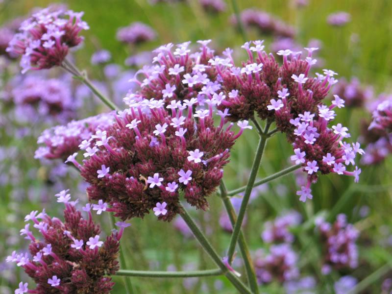 flowersbyseason1