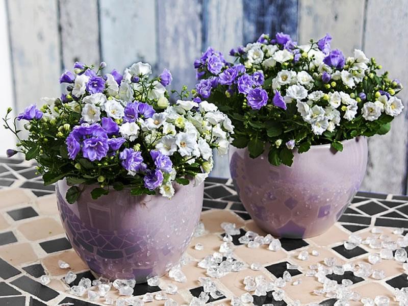 flowersbyseason2