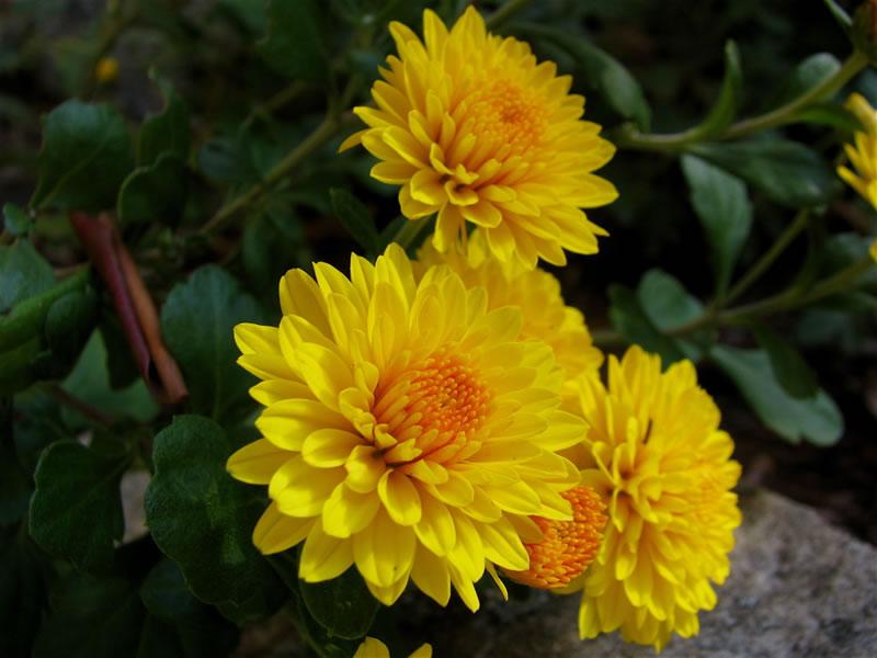 flowersbyseason3