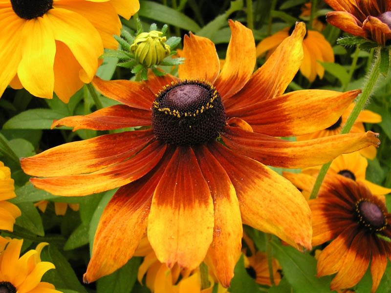 flowersbyseason4