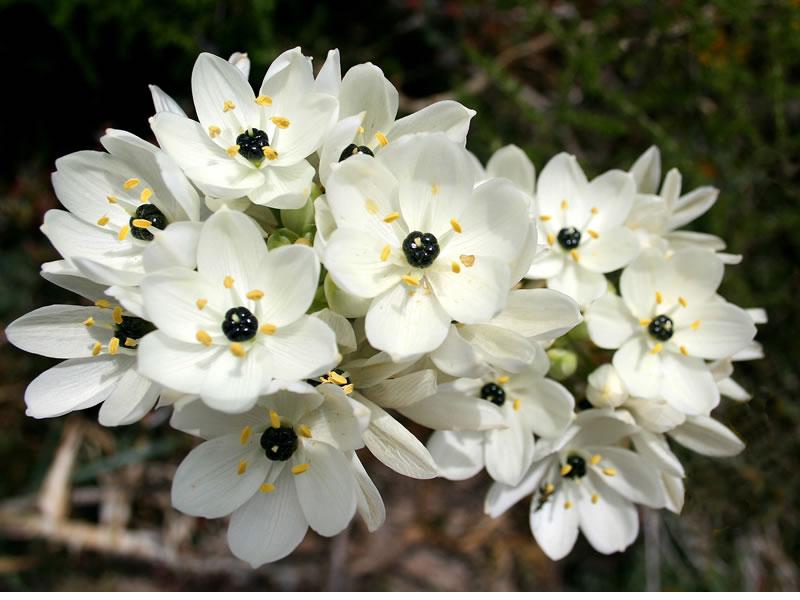 flowersbyseason5