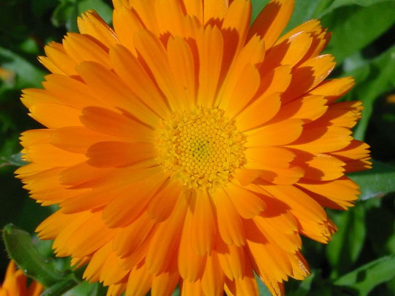 flowersbyseason6