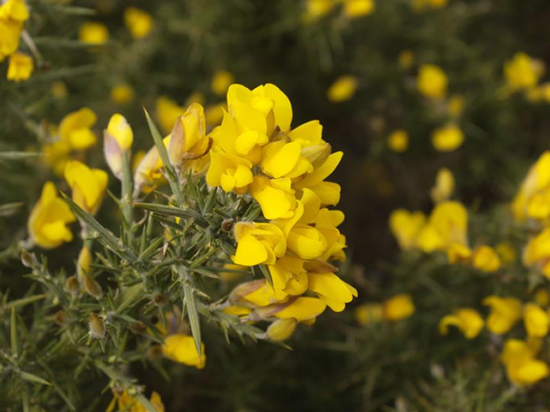 flowersbyseason7
