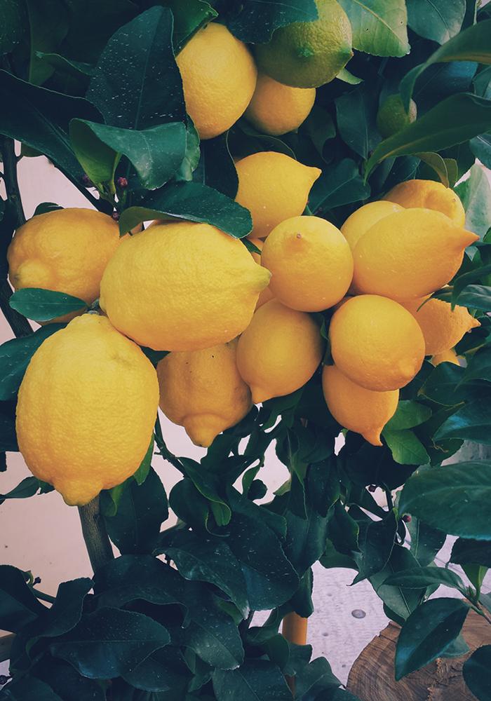 10 foods lemons