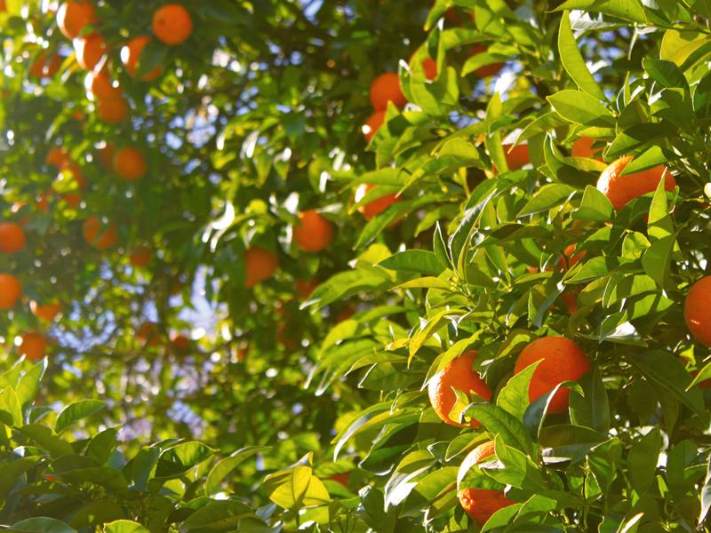 10 foods tangerines