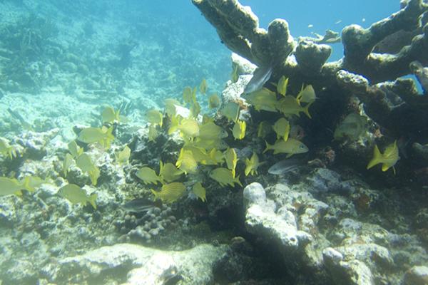 Bahamas romancing 5
