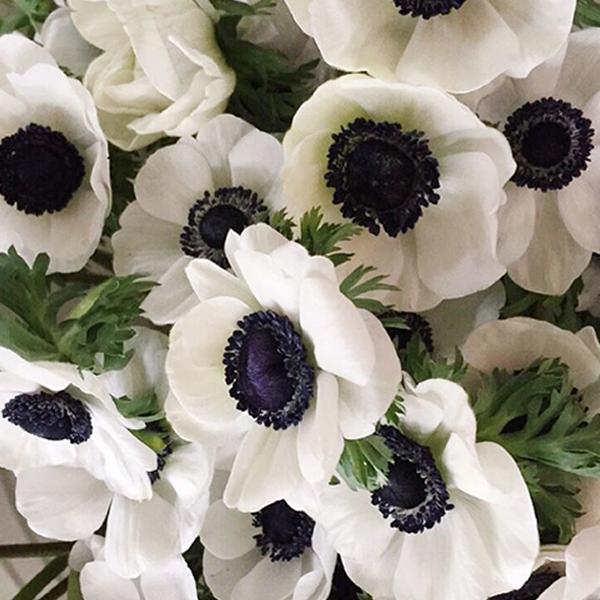 flower-trends-anemonie
