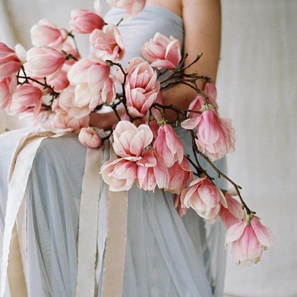flowers-magnolia