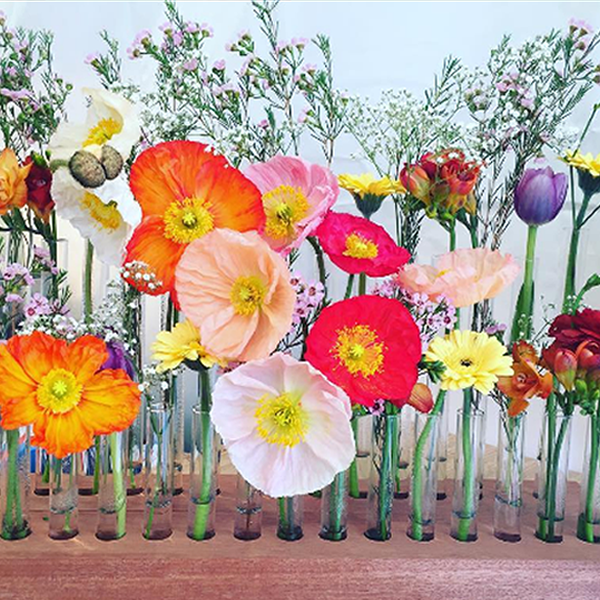 flowers-poppies