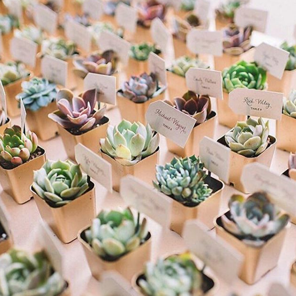 flower-trends-succulents