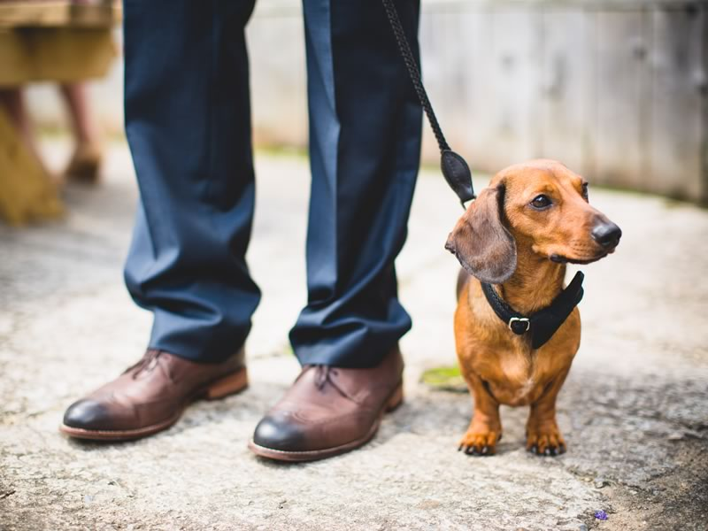 If you love the thought of having your pooch at your wedding, you'll love our round up of 9 of the best looking pets at weddings!