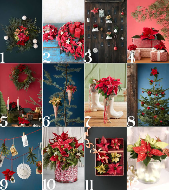 12 different decor ideas of Christmas wedding decor with Poinsettia