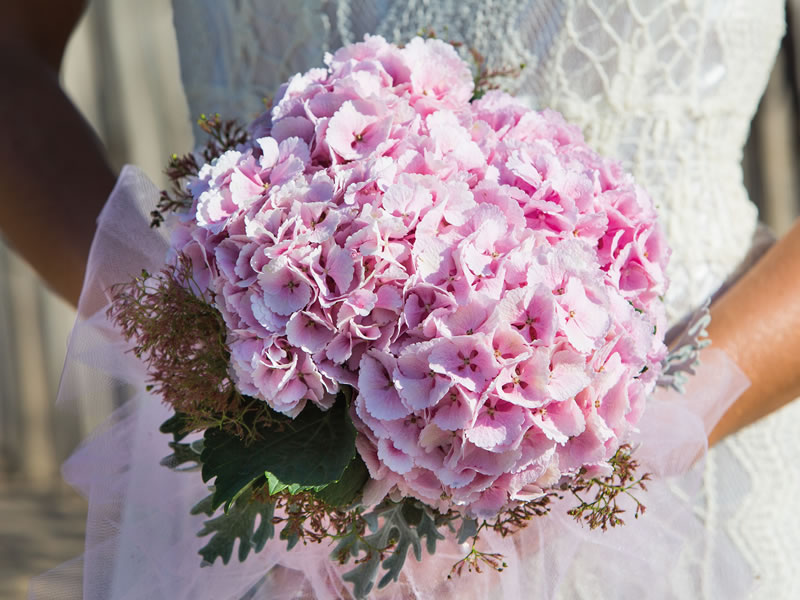 Stylish cut hydrangeas have long been sought-after wedding flowers for blossoming bouquets, elegant inexpensive table centres and at their best from spring through to Autumn