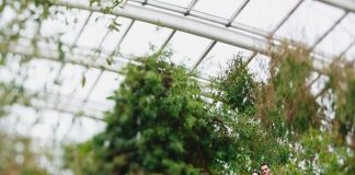 When you opt for an outdoor wedding, there's always the risk of rain. With greenhouse wedding venues, you get the glory of the garden without the worries