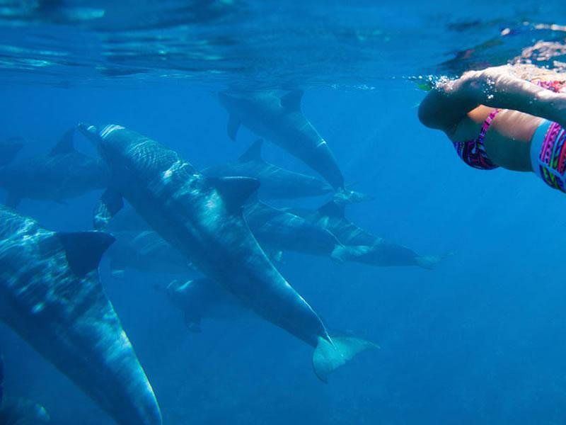 Dolphin Spotting, Mauritius