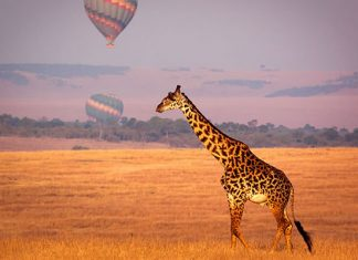 8 Reasons to Visit Africa on Your Honeymoon