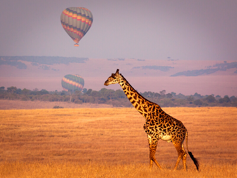 8 Incredible Reasons To Honeymoon In Africa...